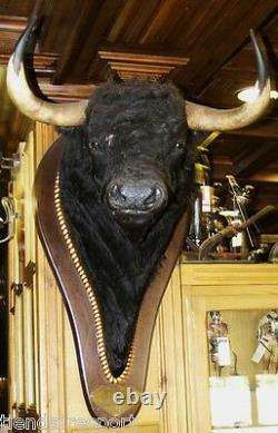 Wow Taxidermy Authentic Shoulder Mount Bull Head Fighter Signed Bullfighter